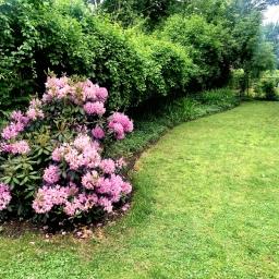 Major Overhaul: Garden